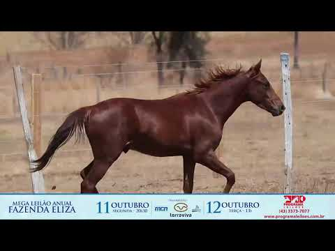 lote 1011 - EQ RED RED MONEY