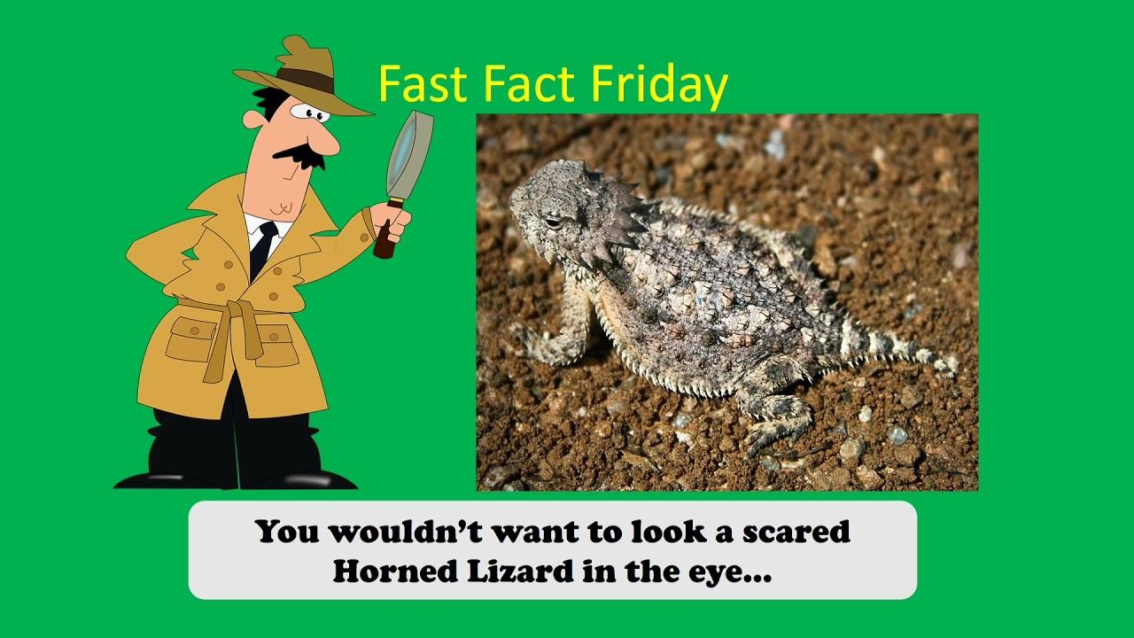 Fast Fact! Horned Lizard