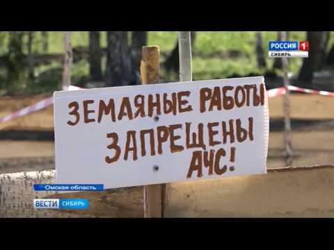 Три новых очага африканской чумы свиней обнаружили в Омской области