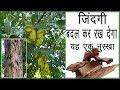 अर्जुन छाल के सेवन से कभी नहीं होंगी ये बीमारियाँ / benefits of arjun chhal / arjun chhal ke fayde
