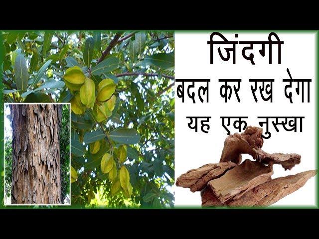 ?????? ??? ?? ???? ?? ??? ???? ????? ?? ????????? / benefits of arjun chhal / arjun chhal ke fayde