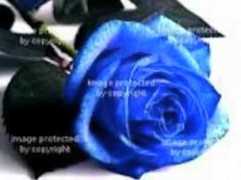 rúže z papíru
