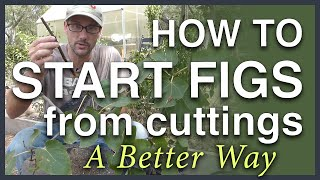 Propagate Figs From Cuttings: A Better Way thumbnail
