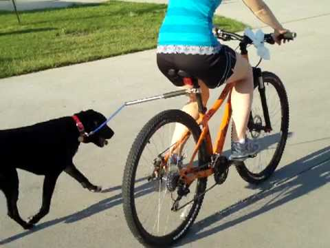 Walkydog Hands Free Dog Bike Leash Review Youtube