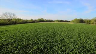 FOOD PLOTS ON A BUDGET: PART 1