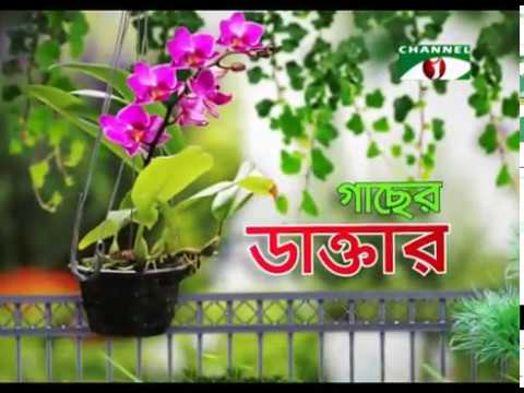 Rooftop farming (EPS 3) ছাদ কৃষি
