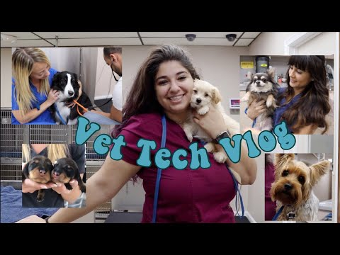 Day In The Life Of A Vet Tech | Vet Tech Vlog | Veterinary Technician