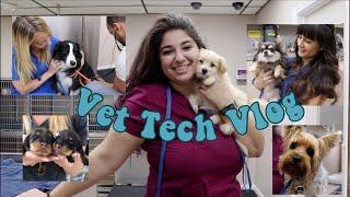 Day In The Life of a Vet Tech | Vet Tech Vlog | Veterinary Technician