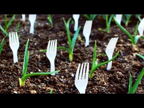 11 Gardening Hacks That Will Blow Your Mind Away
