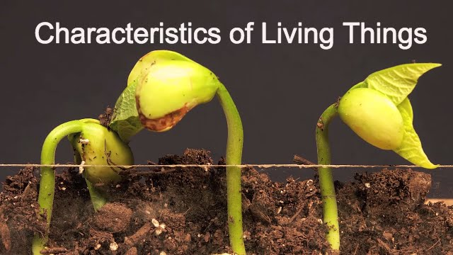 Characteristics of Living ThingsWhat makes something