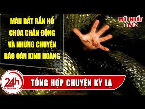 Chuyện Lạ Việt Nam Mới nhất Tay không bắt rắn chấn động MXH.Tổng hợp chuyện rắn báo oán có thật 100%