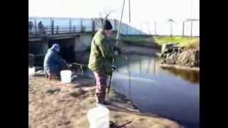 Рыбалка на тарань в Бриньковской  2014 02 22