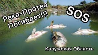 ЭКОЛОГИЧЕСКАЯ КАТАСТРОФА НА РЕКЕ ПРОТВА!!!#обнинск#калужскаяобласть#река#протва