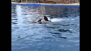 Kim Kardashian in Pool Dolphin