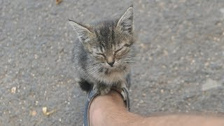 The kitten lives on the street and sleeps on my sneakers thumbnail