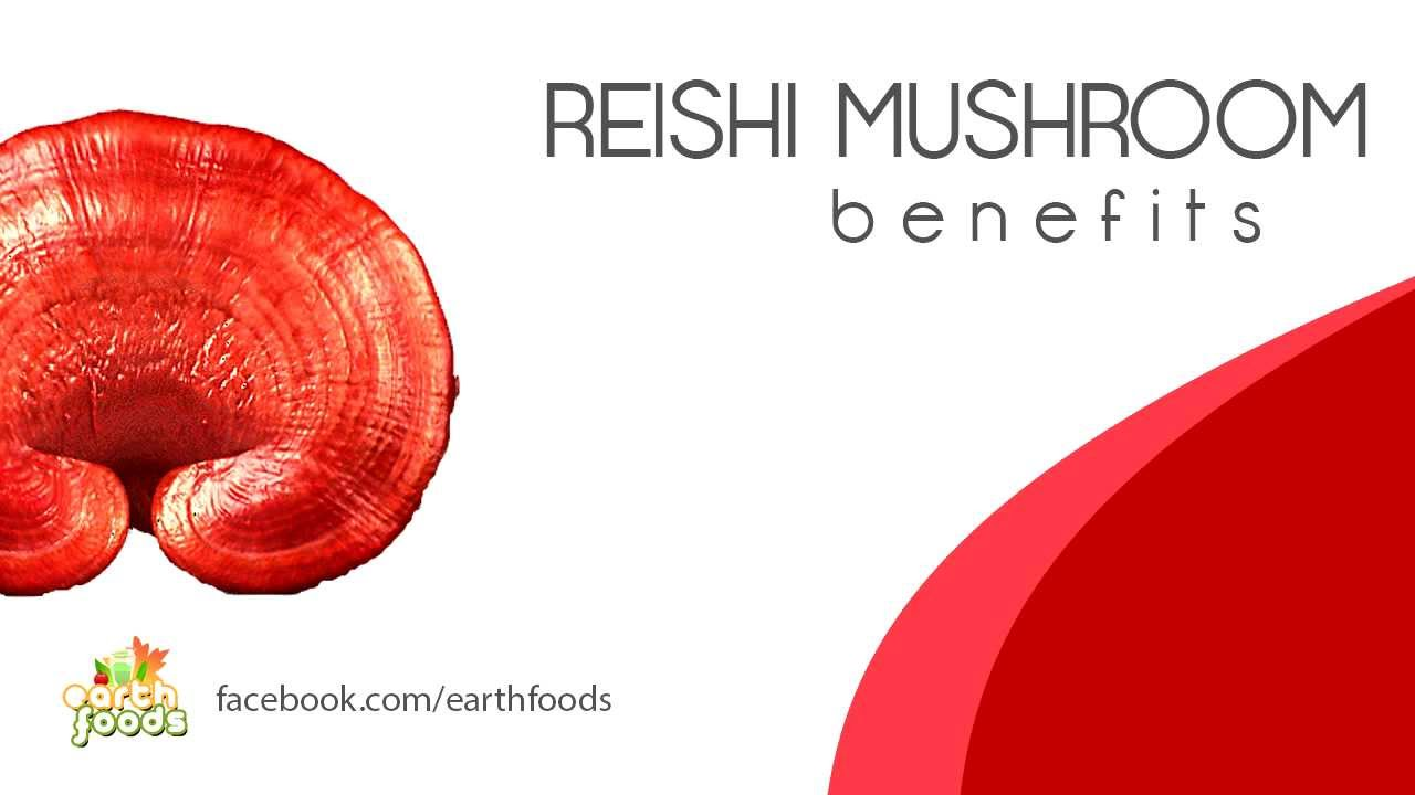 reishi mushroom benefits essay By incorporating low high levels of caffeine brazilian coffee beans and ganoderma lucidum, nam lim xanh finish up with a drink that offers all the benefits of genuine coffee without the side-effects of caffeine, along with the added advantages of reishi gano healthy and balanced coffee is one of the healthiest beverages you can consume, and .