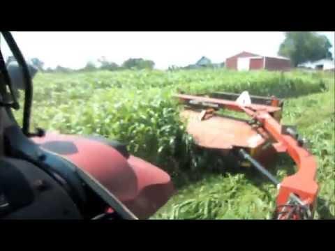 Harvesting Sorghum Sudan 2015