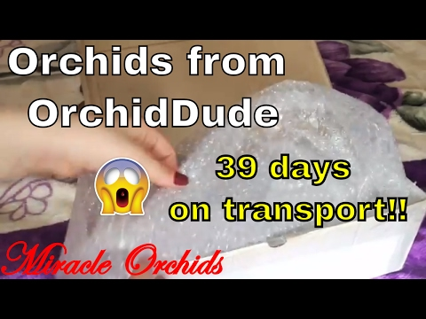 39 Days on Transport!! Unboxing orchids from OrchidDude