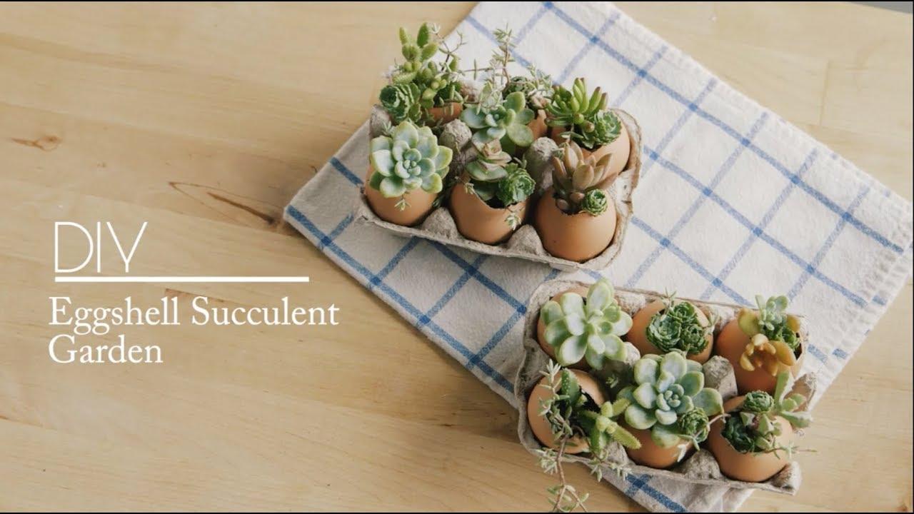 Diy Eggshell Succulent Garden