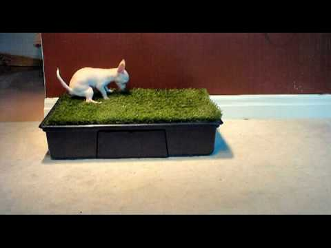 How To Train A Dog To Poop On A Pad