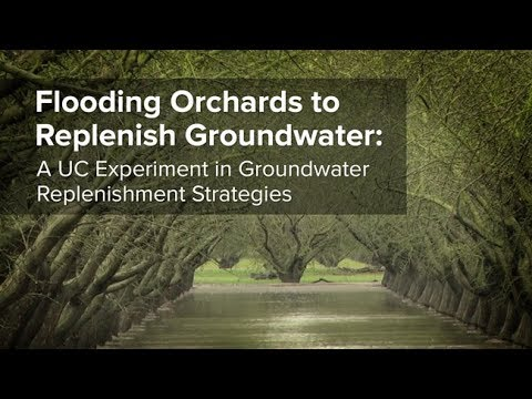 Flooding Orchards to Replenish Groundwater: A UC Experiment in Groundwater Replenishment Strategies