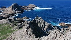 Farallon Islands Live Web Cam | California Academy of Sciences