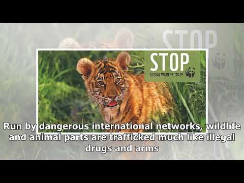 Illegal Wildlife Trade | Threats | WWF