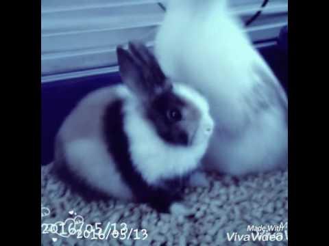 Mijn schattige konijnen♥