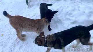 НЕРАВНОСТОРОННИЙ  ТРЕУГОЛЬНИК  - стихи Собаки неУлыбаки