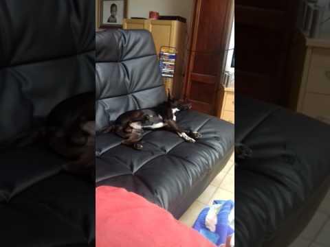 Mon chien est fou