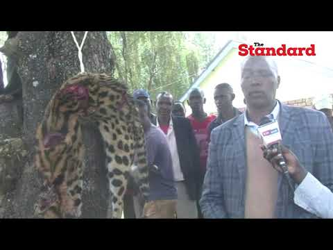 'Leopard' killed by residents of Cheplanget, Kericho county