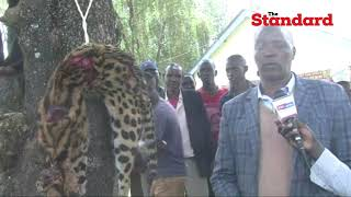 \'Leopard\' killed by residents of Cheplanget, Kericho county