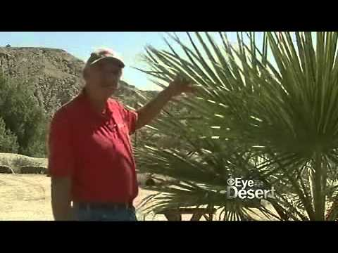 Eye on the Desert - KPSI Local News Channel  2 (Part 1)