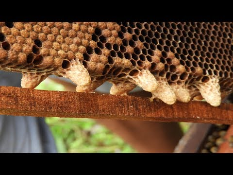 how to split beginners - Splitting bee colonies | site by site splitting bee colonies