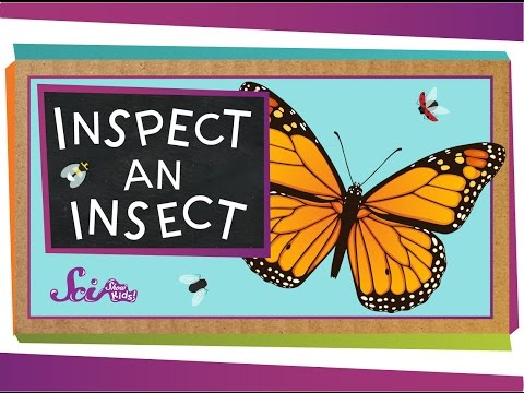 Inspect An Insect