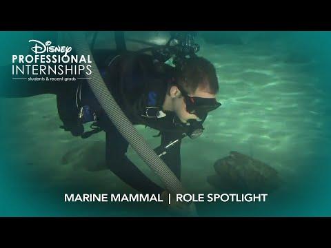Marine Mammal   Disney Professional Internship Role