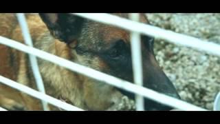 Очень трогательная история, для тех кто любит собак)