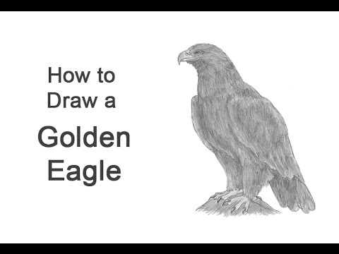 how to draw a golden eagle youtube