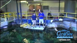 Fish Farms, sharks, discus, cichlids, penguins and more. Blue Zoo TV in 8 mins.