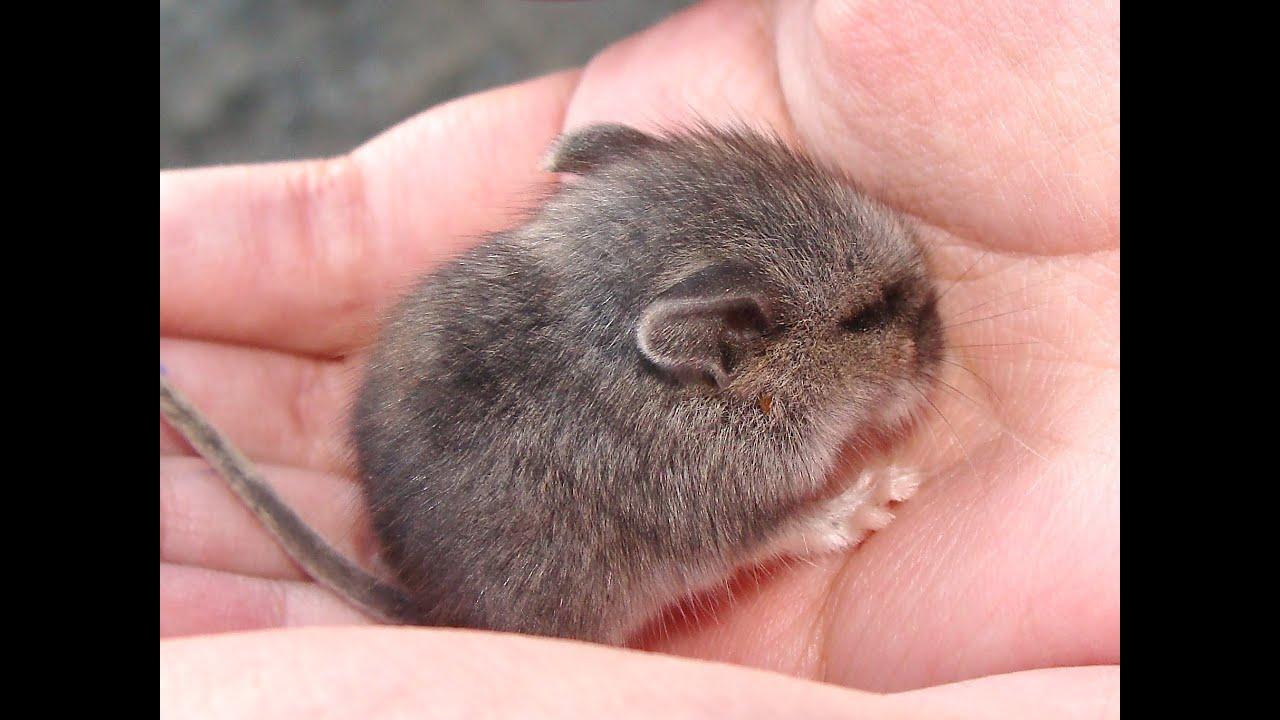 ネズミ 28