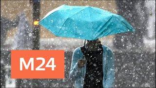 Погода в Москве: в столице ожидаются дожди - Москва 24