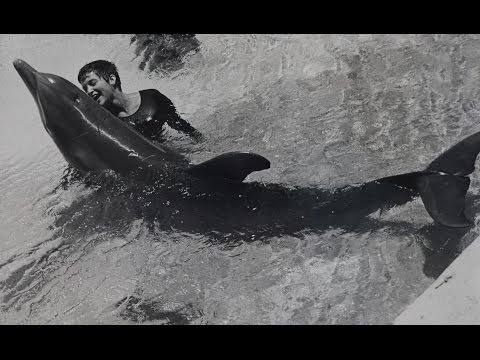 Dealing with a dolphin's 'urges' - The Girl Who Talked to Dolphins: Preview - BBC Four