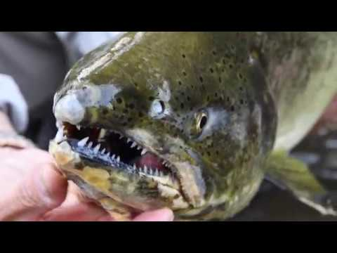 True North Trout Fishing And Guide Service (Boyne City, Michigan)