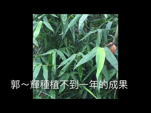 甜籠筍「顧客郭先生」種植不到一年的成果!預訂0921-894-378翊鼎農場