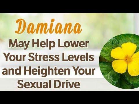 DAMIANA – HOMEOPATHY HERBAL MEDICINE #Herbalmedicine