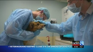 Vets getting plenty of questions on canine flu