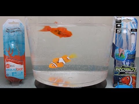 Aquabot 1 0 By Hexbug Versus Robo Fish By Zuru Which Robotic Fish