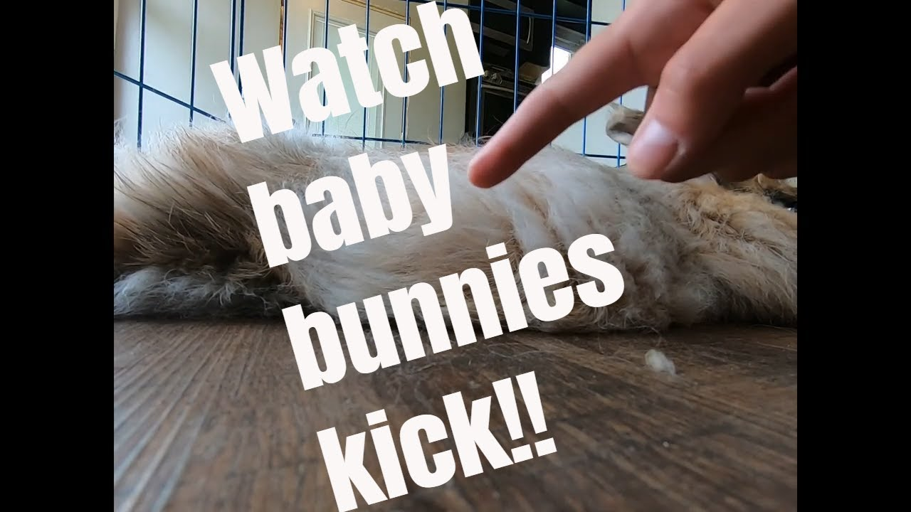 Watch baby bunnies kick!!