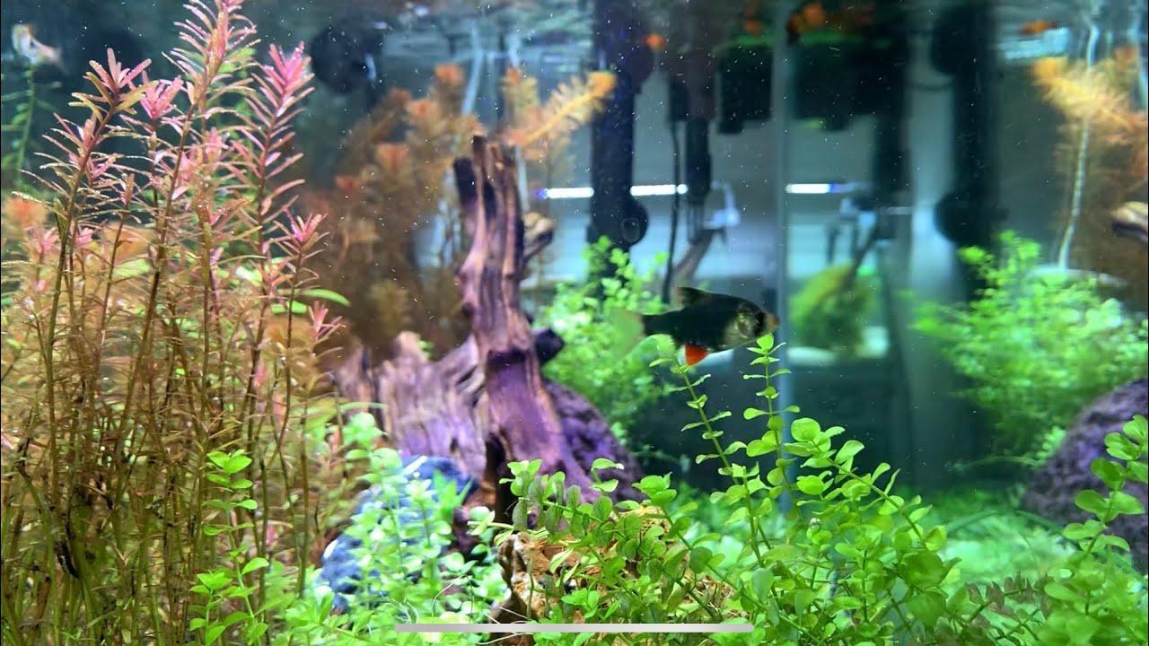 CLEANEST AQUARIUM | HD #aquascape - YouTube
