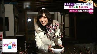 新春の風物詩「長浜盆梅展」が、 滋賀・長浜市の慶雲館で開催されていま...